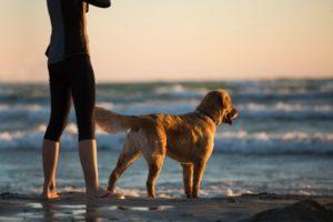 Dogs love the ocean